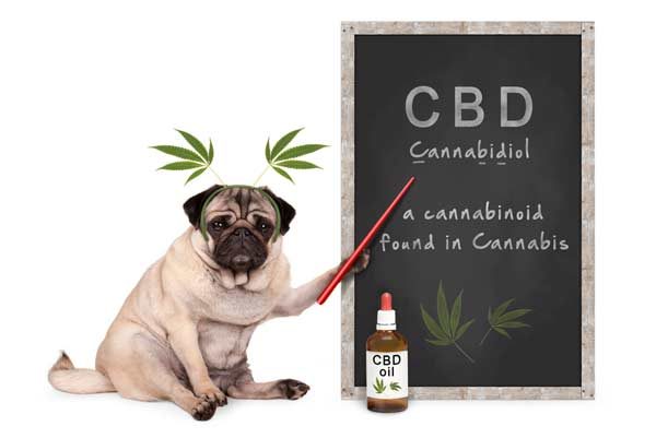 Cbd for pets benefits