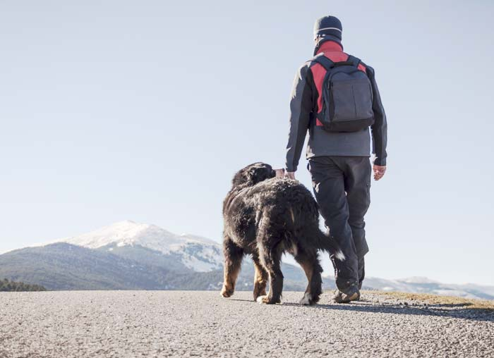 How Can You Travel With Your Pets In A Safe Manner?