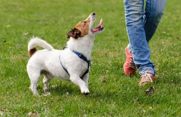 The best times to start training your dog