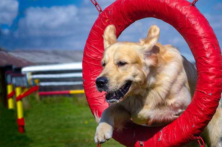 When Should I Start Training my Dog