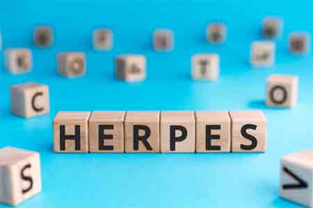 Herpes Enters by Adhering and Fusing with Vaginal Cells