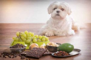 Read more about the article How to Prevent Mycotoxin Poisoning in Dogs