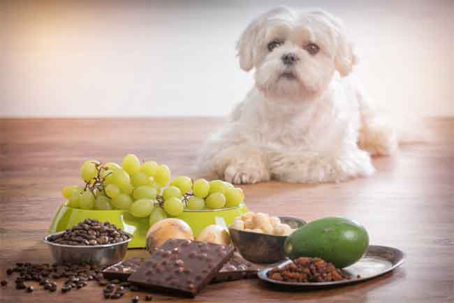 How to Prevent Mycotoxin Poisoning in Dogs