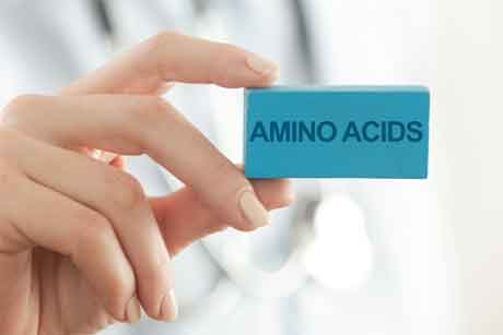 What Types of Amino Acids are responsible for Weight loss
